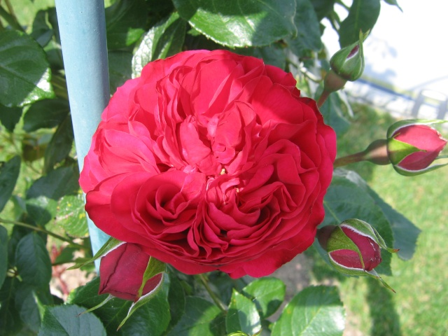 regardez mes belles fleurs Plante13