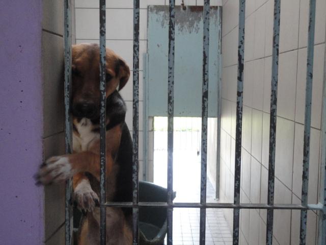 WALLA, croisée beagle femelle, 62  T_530_10