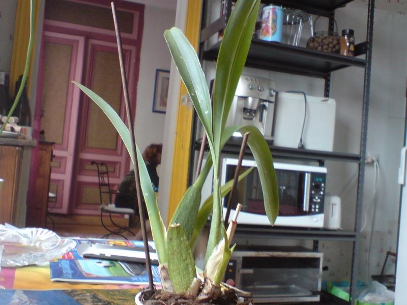 Besoin de conseils sur des orchidées Dsc02619
