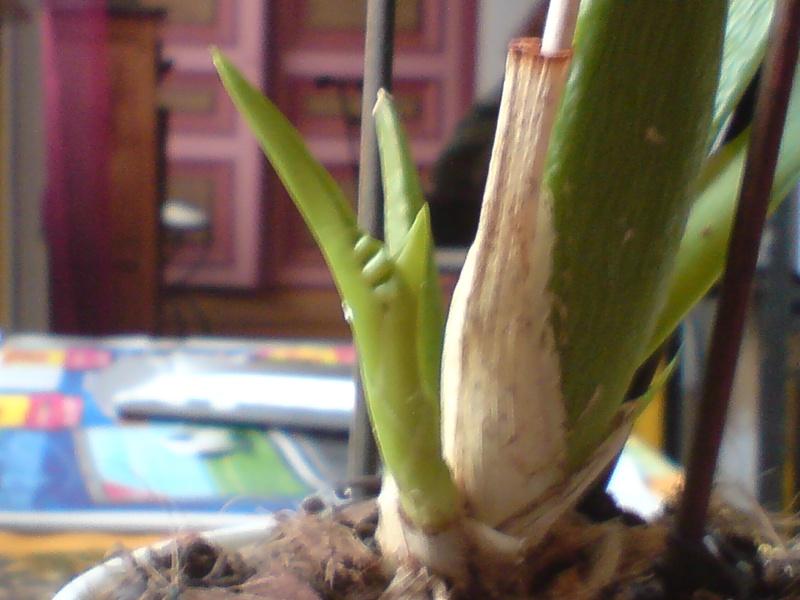 Besoin de conseils sur des orchidées Dsc02620
