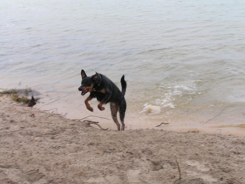 chien heureux sans jouets!! Pict0014