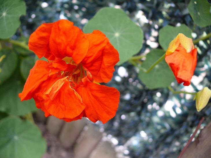Julio en flor Capuch10