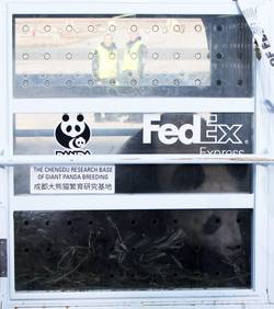 Corydoras Panda, Oliv. - Page 3 Panda-10