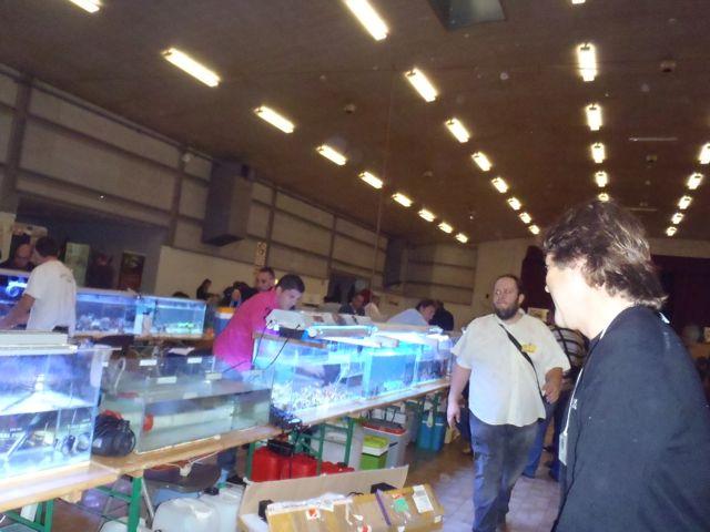 Bourse de Montauban ce week end - Page 2 Pb040020