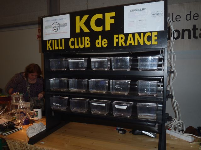 Bourse de Montauban ce week end - Page 2 Pb040037