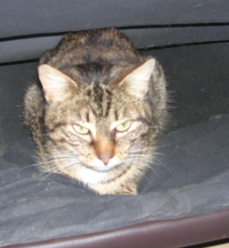 THEMIS, née en janvier 2010 Themis10