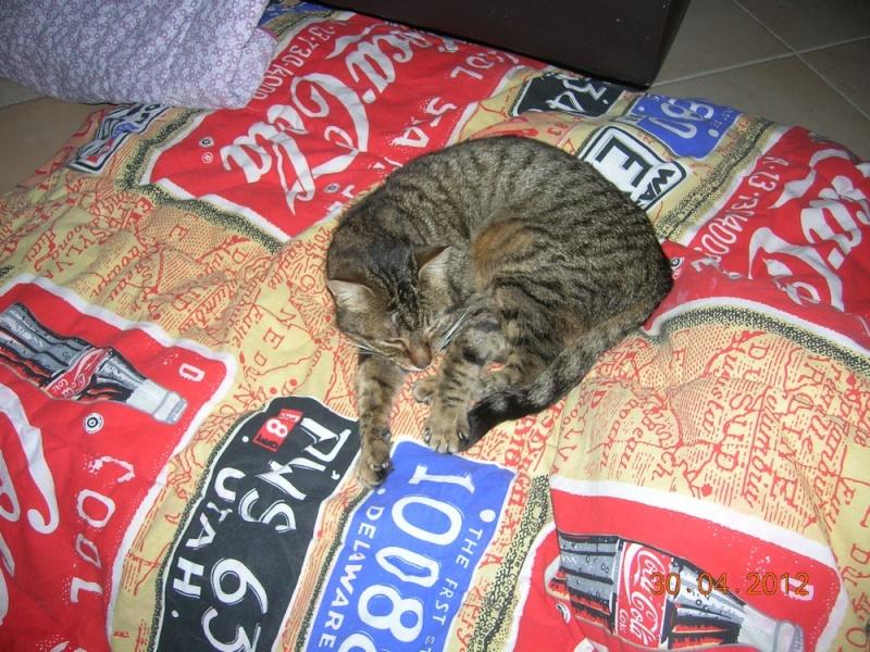 THEMIS, née en janvier 2010 Themis11