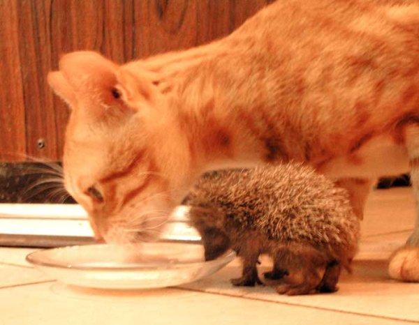 Смешные картинки и фото животных 110