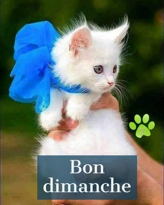 Bonjour, bonsoir d'Octobre 10710313