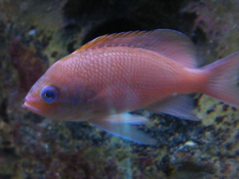 Le CRA à l'aquarium de Biarritz Dscf6616