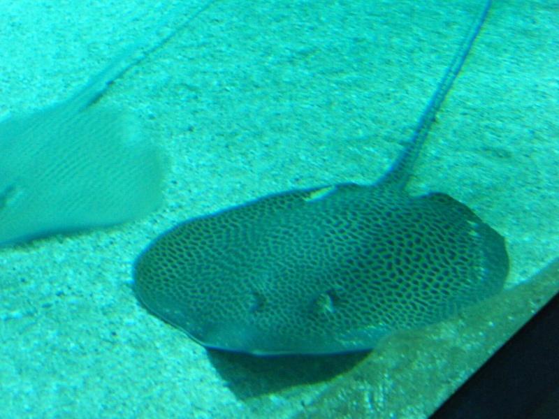 Le CRA à l'aquarium de Biarritz Dscf6812