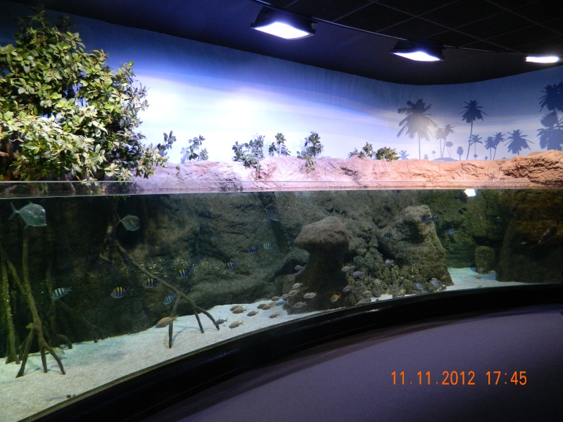 Le CRA à l'aquarium de Biarritz Dscn1112