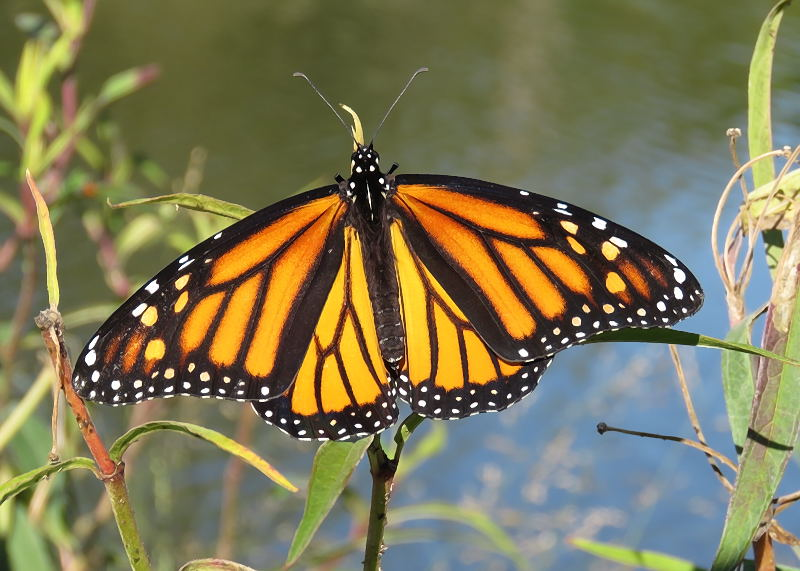 Papillons 06-09-13