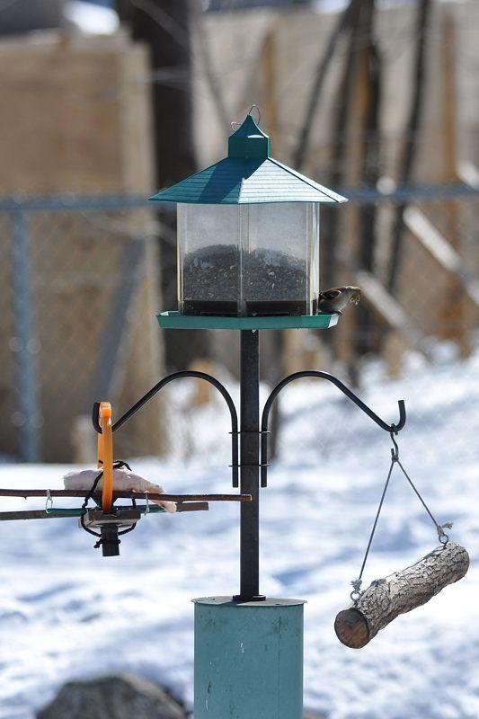 Écureuils 16-03-10