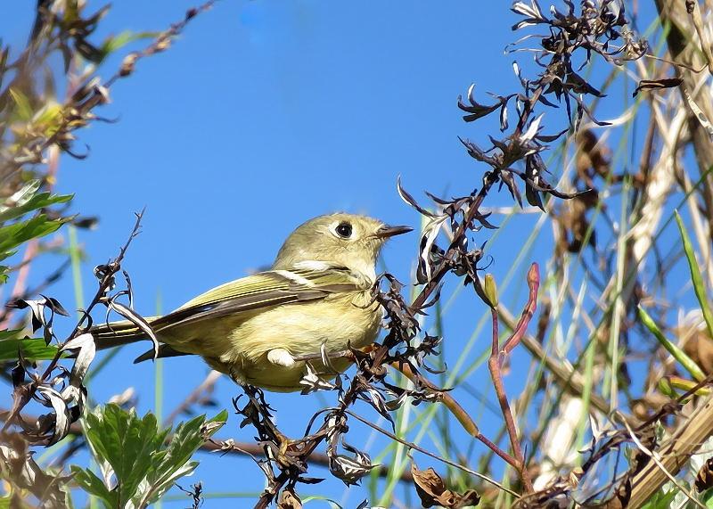 Deux oiseaux à identifier 17-10-12