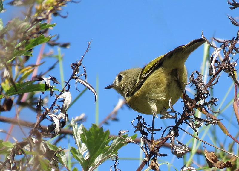 Deux oiseaux à identifier 17-10-13