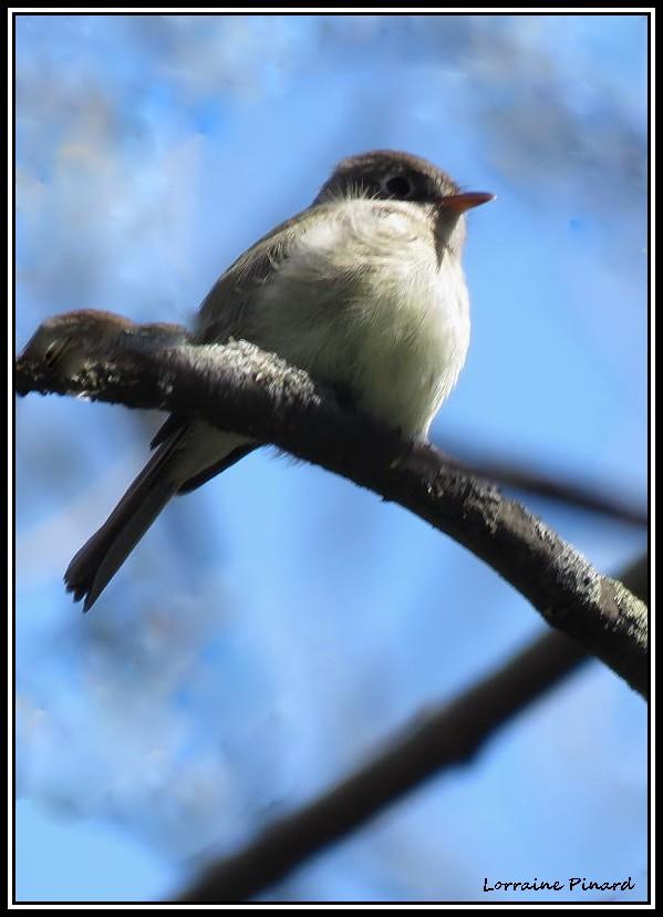 2 oiseaux à identifier 19-05-19