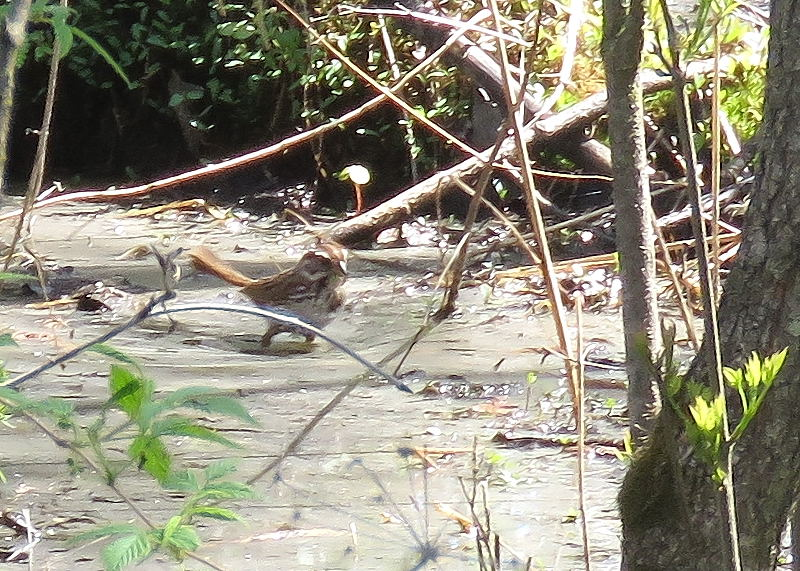 2 oiseaux à identifier 21-05-12
