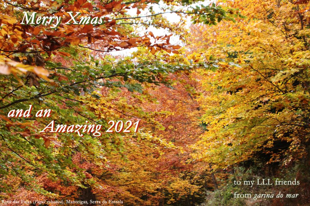 Christmas Greetings - Page 2 Natal_14