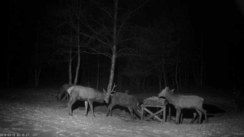 Red Deer Cam (Saarema Island)  - Page 35 Vlcsna64