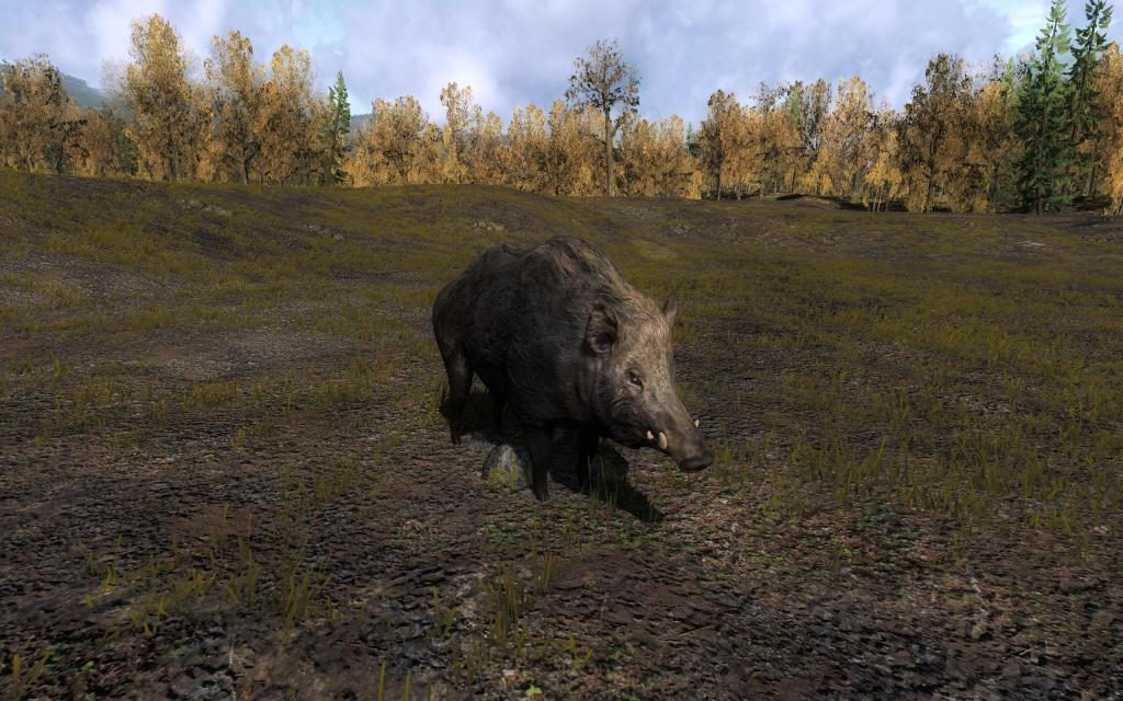 Jeu de chasse : The Hunter - Page 2 Wild_b11