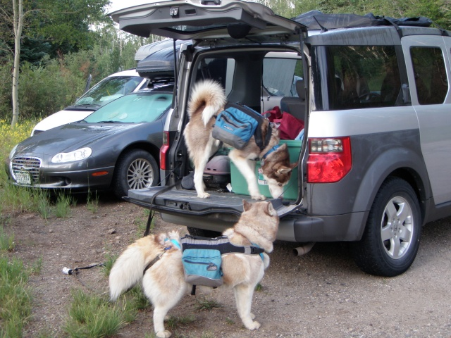 Best car for transporting two huskies P7300110