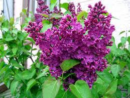 Un salon violet et vert anis Printe11