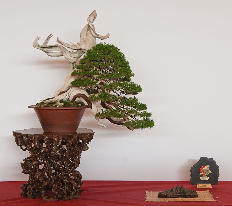Bonsai Autumn Movies (videos) and Photos 0111