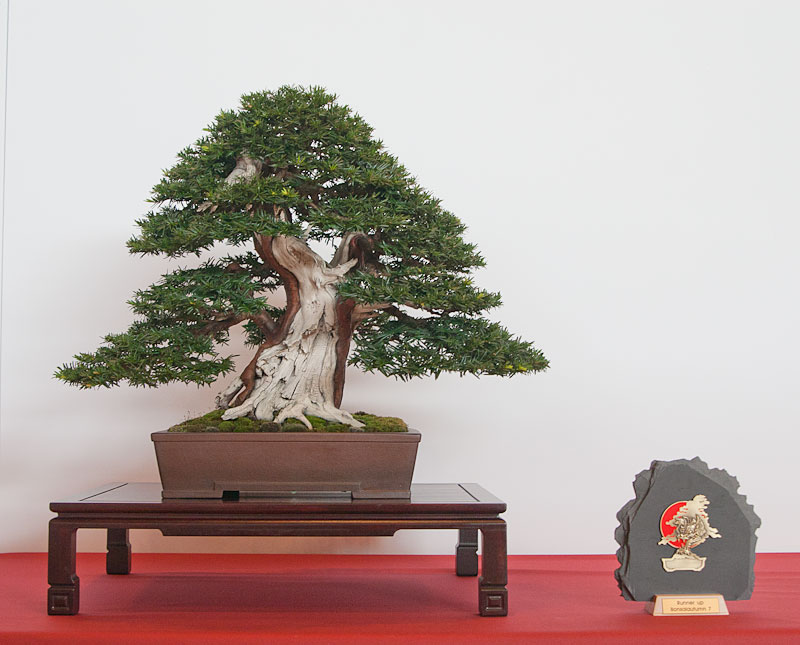 Bonsai Autumn Movies (videos) and Photos 0311
