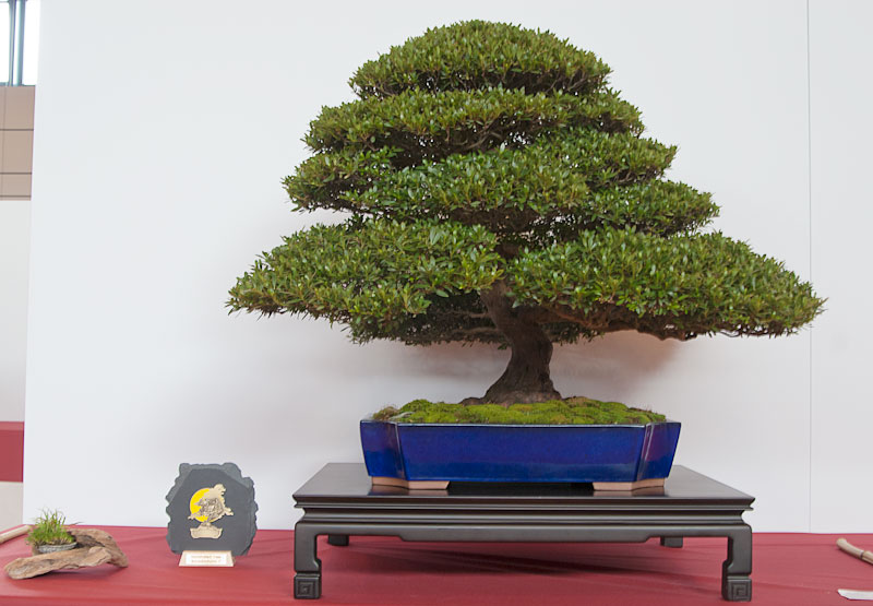 Bonsai Autumn Movies (videos) and Photos 0510