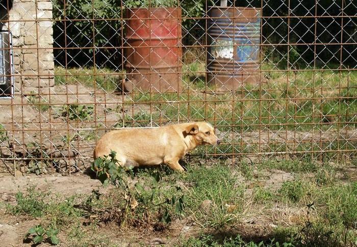 sayouri - SAYOURI F-X, petite/moyenne, env. 12 kg, née env. 2008 (Etela) Prise en charge Asso Enfin le Bonheur Sayour11