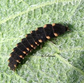 Les chenilles deviendront des papillons ... 05-05-17