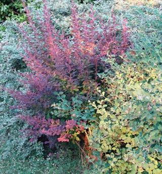 Jardinage plaisir - jardin détente - biodiversité Dsc08015