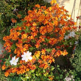Jardinage plaisir - jardin détente - biodiversité Dsc08016