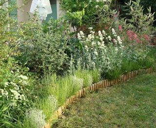 Jardinage plaisir - jardin détente - biodiversité Dsc08517
