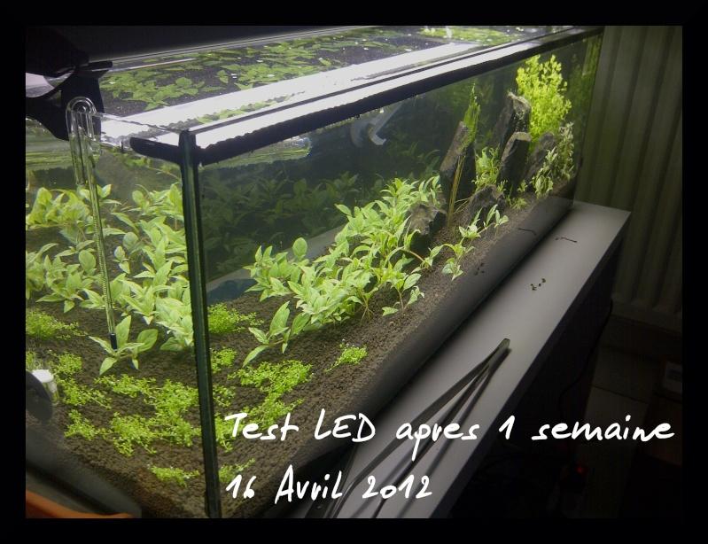 """Vrai test sur """"Eclairage LED lumivie pour bacs plantés"""" Img-2012"""