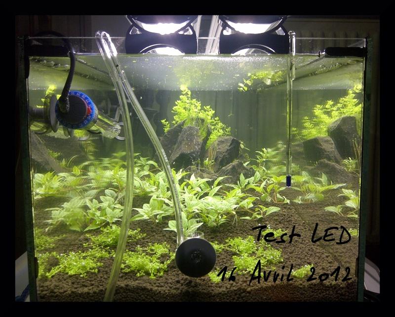 """Vrai test sur """"Eclairage LED lumivie pour bacs plantés"""" Img-2013"""