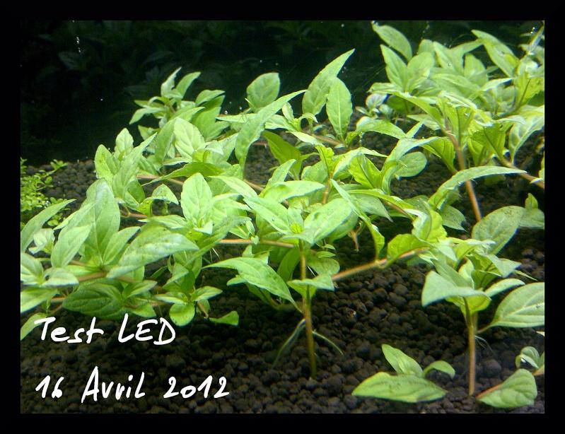 """Vrai test sur """"Eclairage LED lumivie pour bacs plantés"""" Img-2015"""