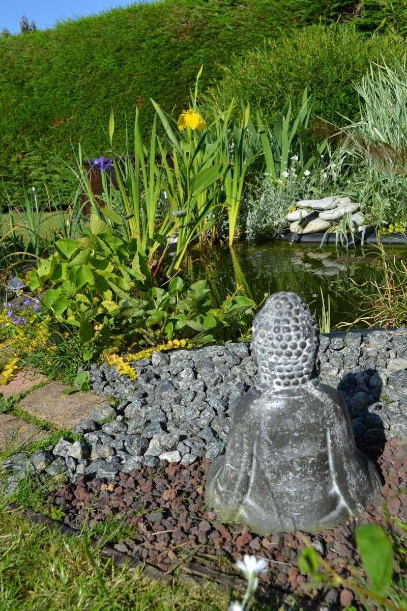MON PETIT BASSIN de jardin 500 L  + photos - Page 3 Dsc_0411