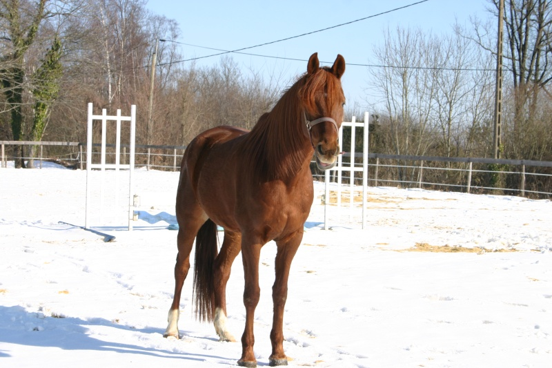 CANTER - Portail Img_1117