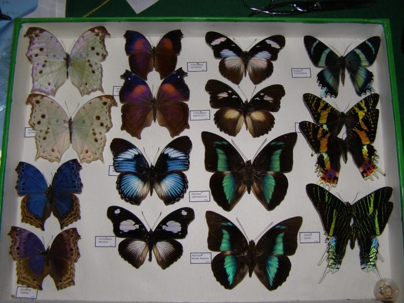 Présentation des collections Entomologiques Pb100012