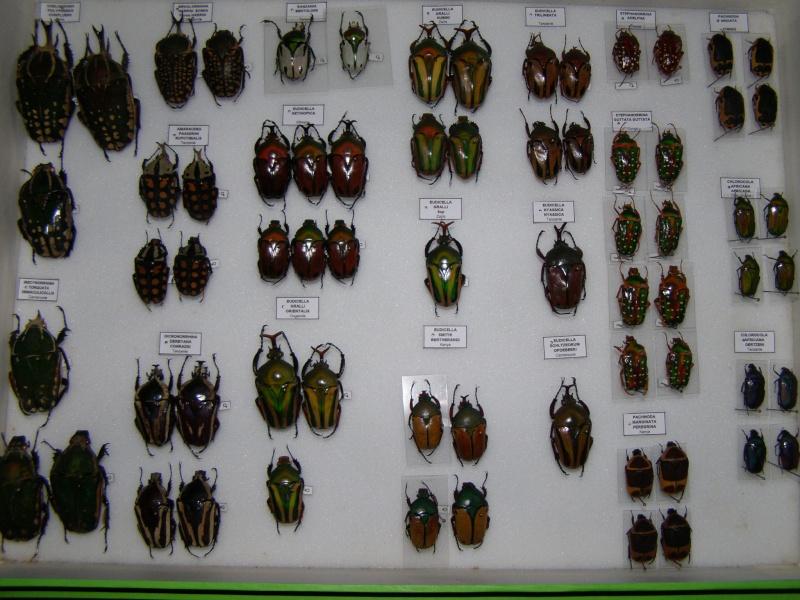 Présentation des collections Entomologiques Pb100013
