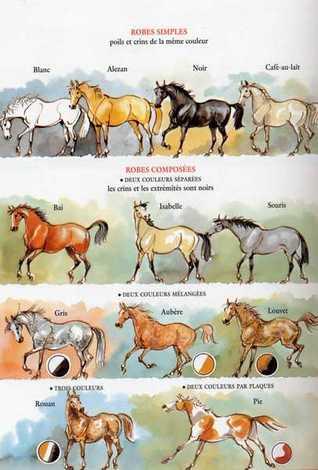 Des robes des chevaux Robes-10