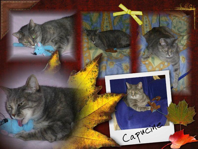 CAPUCINE (nouvelles) Collag16