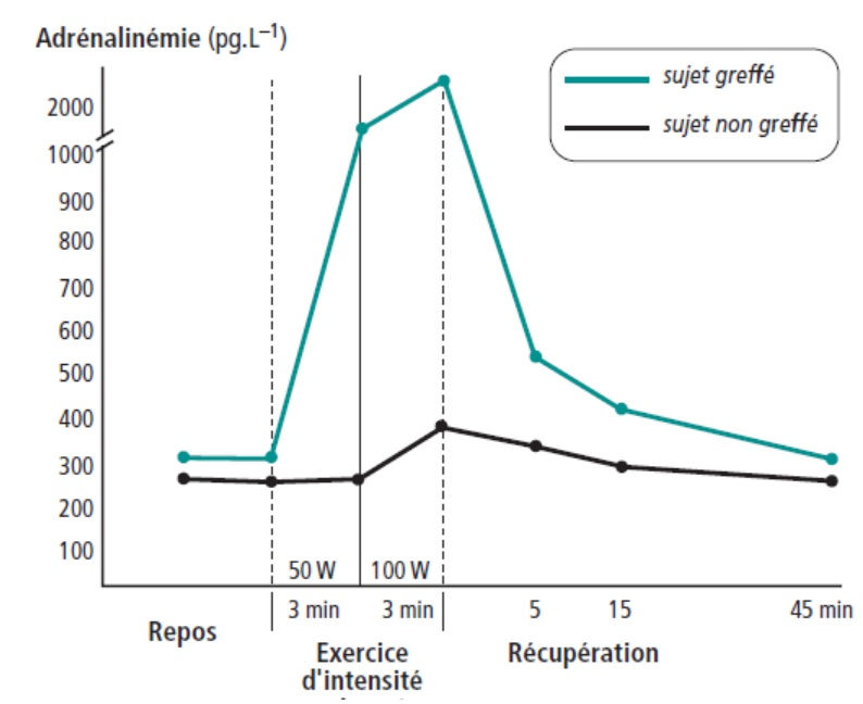 regulation - Régulation cardivasculaire Gra10