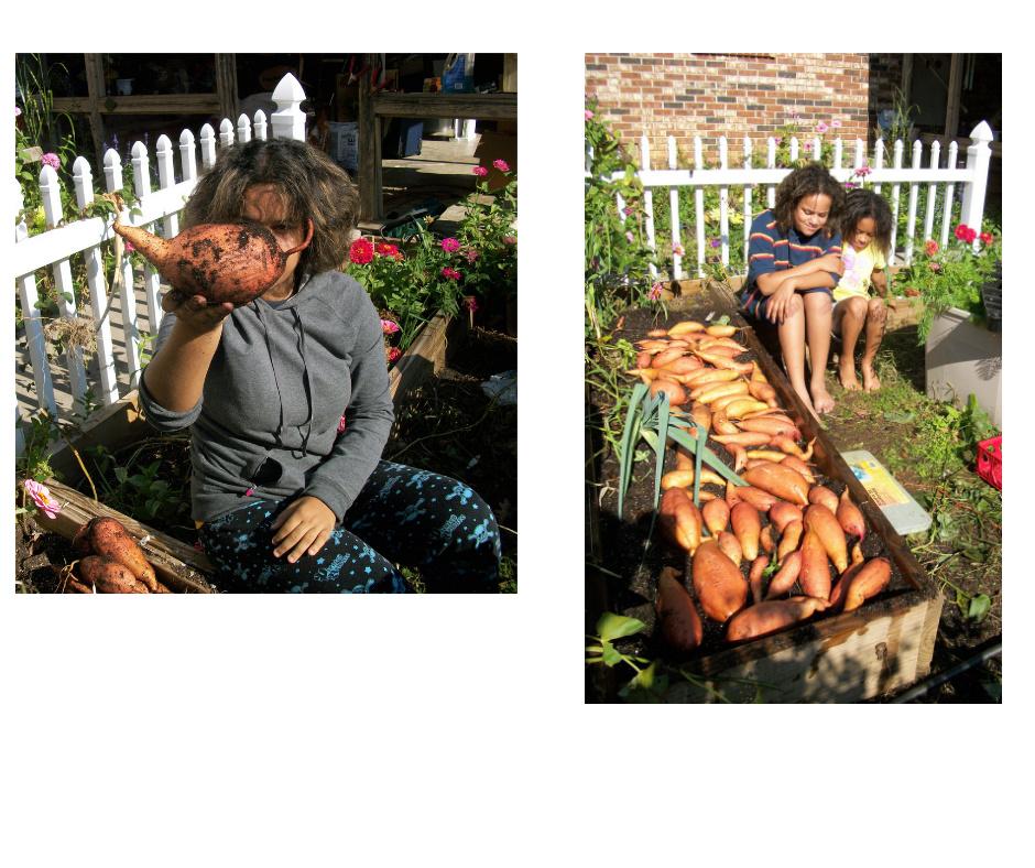 Sweet Potatoes - Page 8 Sweet_10