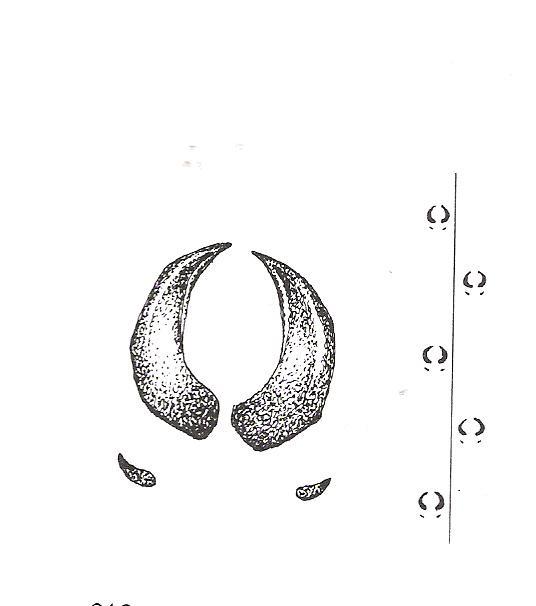Les bois ou mais c'est quoi ? - Page 4 00242