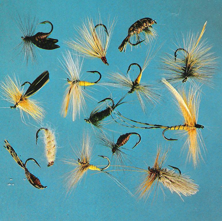Pêche à la mouche ! - Page 3 00243