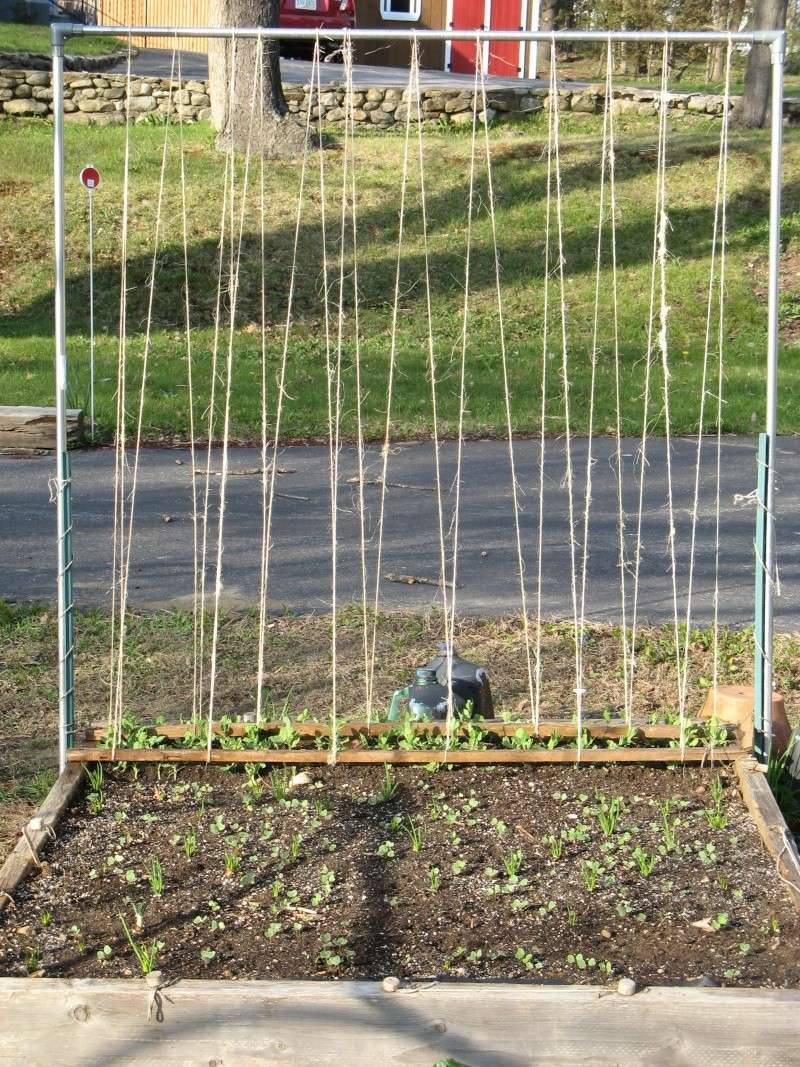 How would you string this pea trellis? 00614