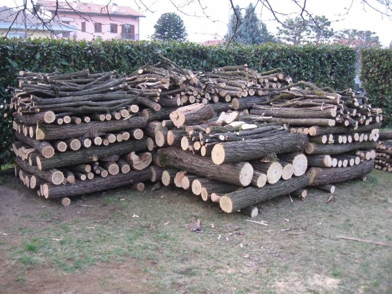Come stimare il peso di legna resa da  un albero Img_8911